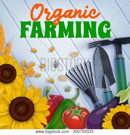Garden Tools, Organic Farming Vegetables And Plants With Seeds, Agriculture Vector Design. Gardening