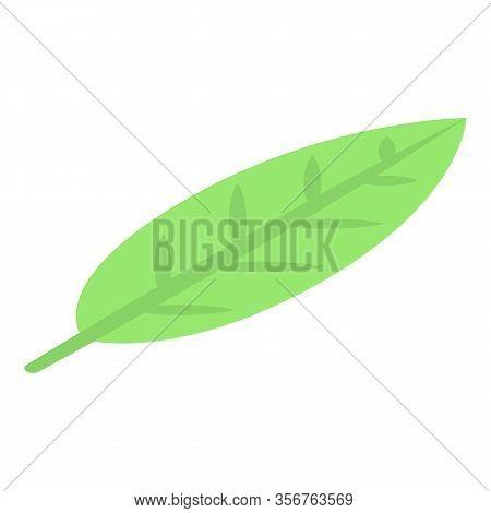 Longan Leaf Icon. Isometric Of Longan Leaf Vector Icon For Web Design Isolated On White Background