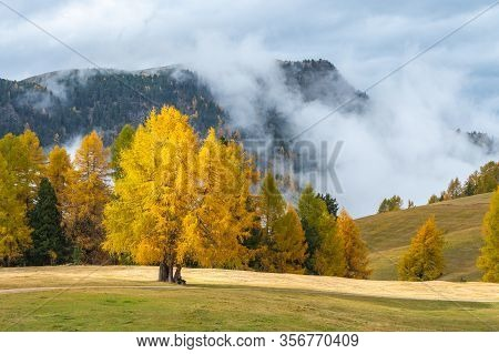 A Misty View Of The Meadows In The Dolomites After The Rain
