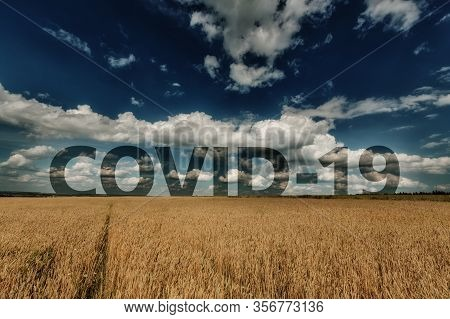 Landscape Of Wheat Ears And Blue Cloudy Sky With Word Covid-19 At Horizon