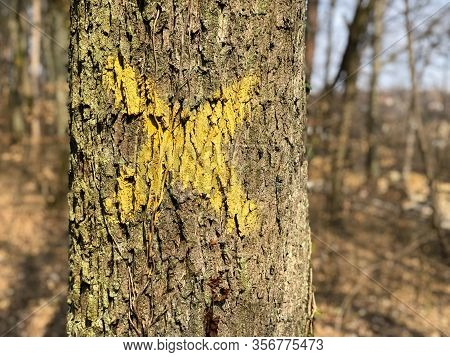 Tree With X On It. Sign For Cutting Trees. Cracked Bark Of A Plant. Dead Yellow Wood. Harmonious Emb