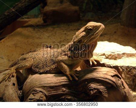 The Lizard In The Vivarium - Ljubljana, Slovenia (slovenija)