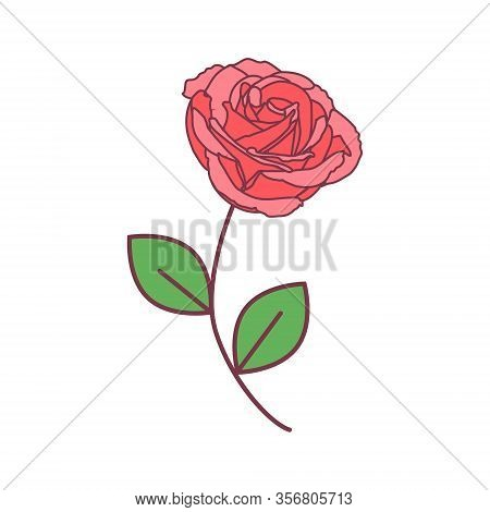 Vector Cute Single Rose. Pink Rose With Green Leaves On A Long Green Stem