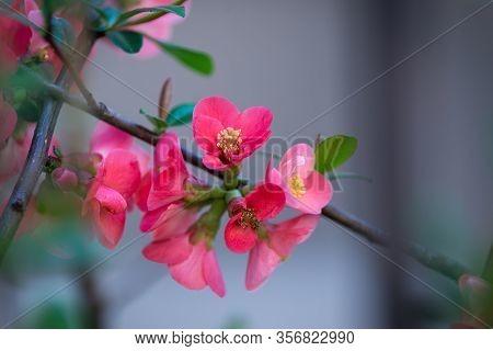 Spring Flowers Blossom. Blossom Of Spring Flowers. White Flowers Blossom In Spring. Spring Blossom.
