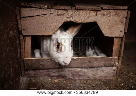 Rabbit In A House With Her Offspring. Wooden Rabbits House