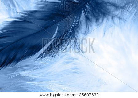 Close-up of  feather on background. Macro