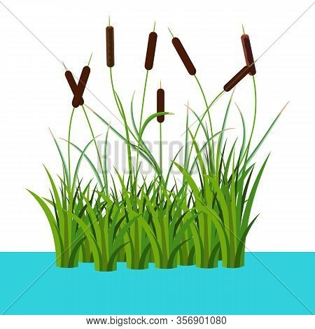 Bunch Of Reed Bushes In The Water Vector Illustration Isolated On White. Cartoon Props And Landscape
