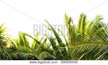 Palm Leaves With The Sun Passing Through Them In A Star Shape, Horizontal Image With Space At The To