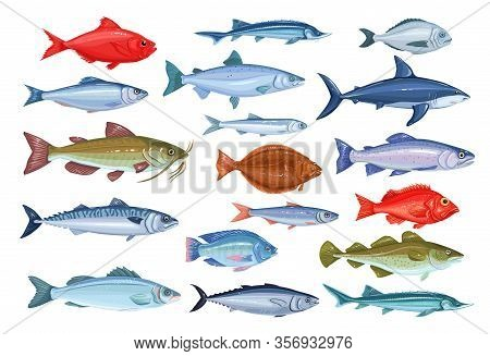 Fish Icons. Seafood Of Bream, Mackerel, Tunny Or Sterlet, Catfish, Codfish And Halibut. Cartoon Icon