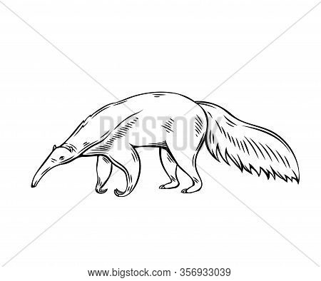 Anteater Animal Icon. Ant-bear Outline Vector Illustration For Zoo Design.