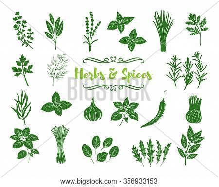 Herbs And Spices Glyph Icons. Silhouettes Popular Culinary Herbs, Stamp Print Vector Illustration. B