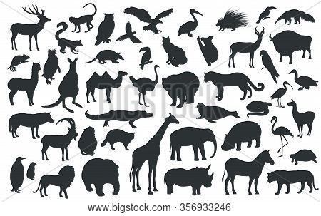Silhouettes Of Traditional Animals Zoo. Bear, Giraffe, Panda, Tiger, Lion, Camel And Other Wild Anim