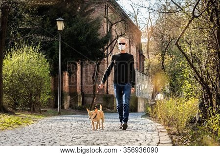 Chihuahua Dog  With Owner Wearing A Face Mask And  Leash  Walking Together Outdoors ,outside At The
