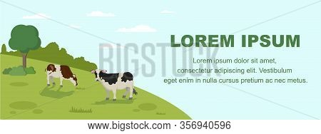 Cow Grazing On Meadow Banner. Animal Farm Cattle Livestock Eating Grass On Field Vector Llustration.