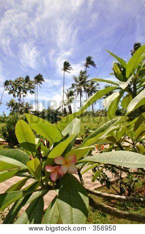 Garden In Guam