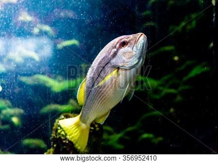 Red Asiatic Fish In The Water Tropical Nature