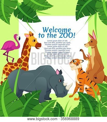 African Animals On Palm Leaves Nature Background, Kangaroo With Cub, Rhinoceros, Pink Flamingo, Tige