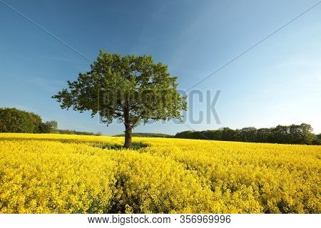 Tree in the blooming oilseed field spring.