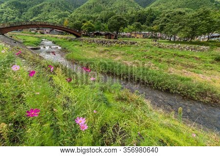 Japanese Countryside Landscape With Flowering Cosmos Flowers And Wooden Arch Bridge On The Backgroun
