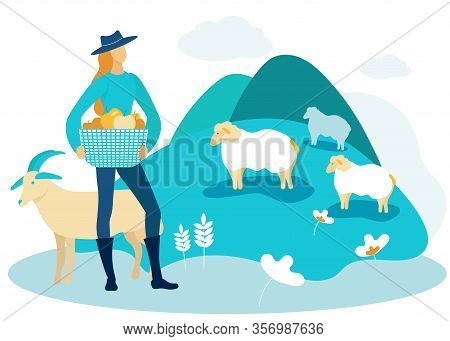 Woman In Black Boots And Blue Hat With Basket With Apples In Pasture. Sheep Graze On Field. Vector I