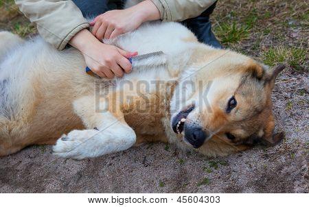 Dog Maintenance