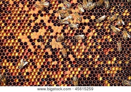 plenty of bees on honeycomb in the springtime poster