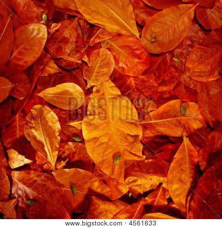Dried Leaves Of Autumn