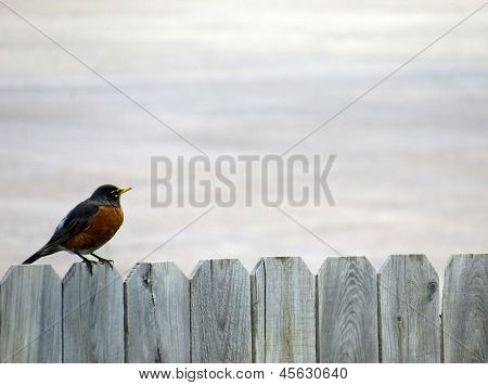 Bird Fence Background
