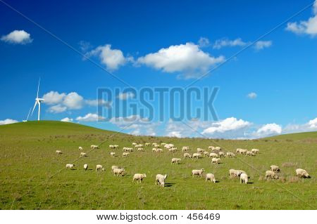 field with windmills and sheep poster