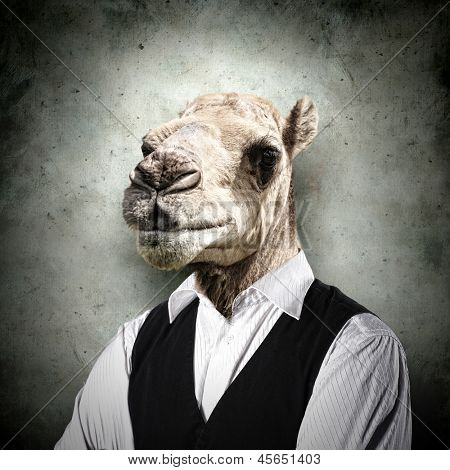 Portrait of a funny camel in a business suit on a gray background. collage