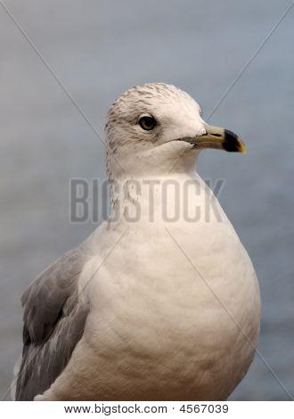 An Alert Bird