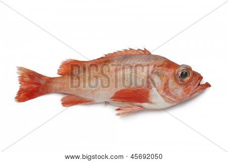 Single redfish on white background
