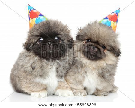 Pekingese puppies in party cones on white background poster