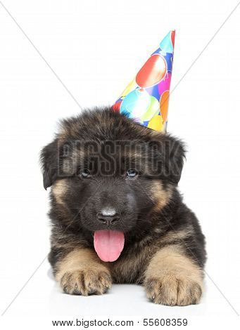 German shepherd puppy in party cone lying on a white background poster
