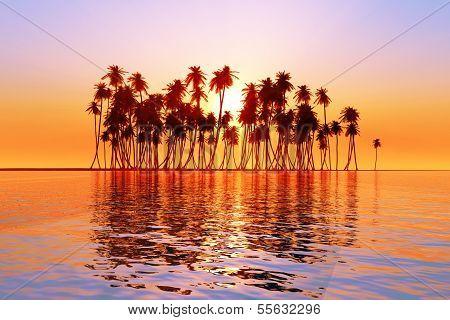 Sun Over Coconut Palms