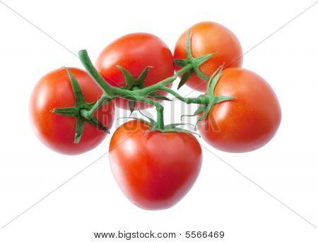 Five Tomatoes On A Branch