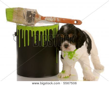 Cocker Spaniel Puppy With Paint Can