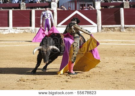 Spanish bullfighter Morante de la Puebla with the capote or cape bullfighting called chicuelina a bu