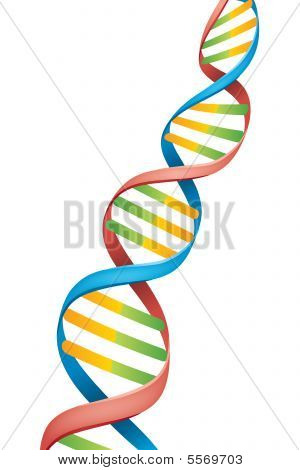 Double Helix Dna Strand