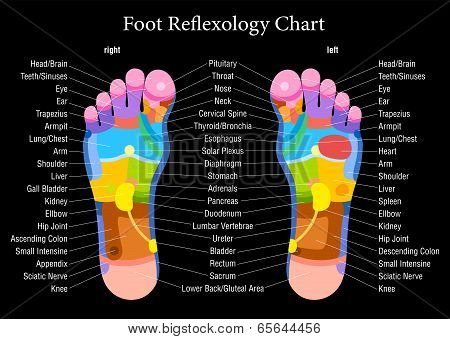 Foot reflexology chart with accurate description of the corresponding internal organs and body parts. Vector illustration on black background. poster
