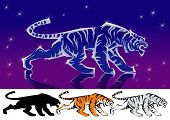 The Shining tiger skulk in the night. poster