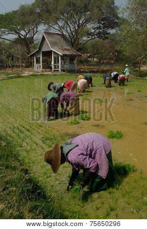 Women Working In Myanmar .