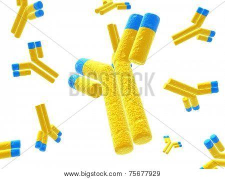 isolated antibodies