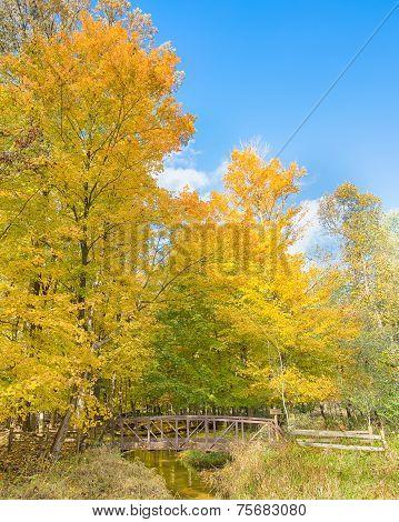 Autumn Revlection, Rouge River, Stage Nature Area, Troy, Mi