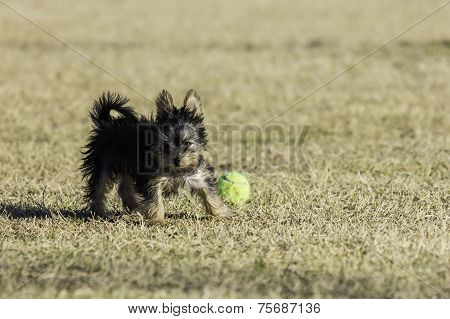 Puppy playing at park
