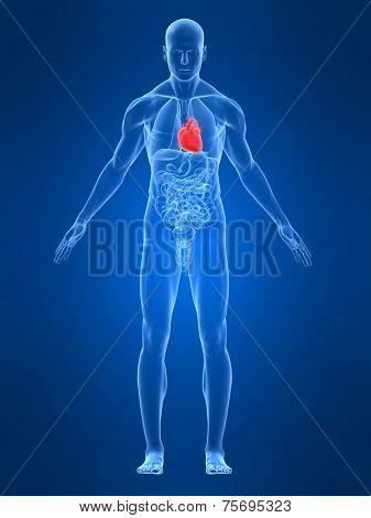 highlighted heart