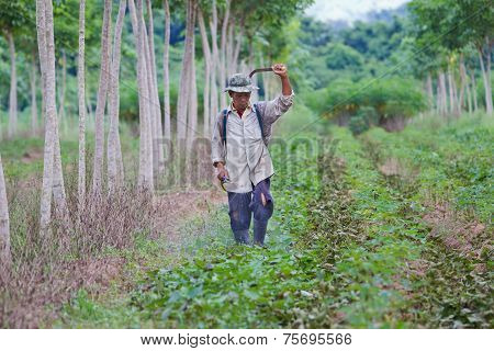 Pesticides Spraying. Farmer Kills Weed Spraying Pesticides In Field By Manual Backpack Sprayer.