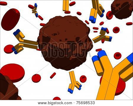 cancer cells and antibodies