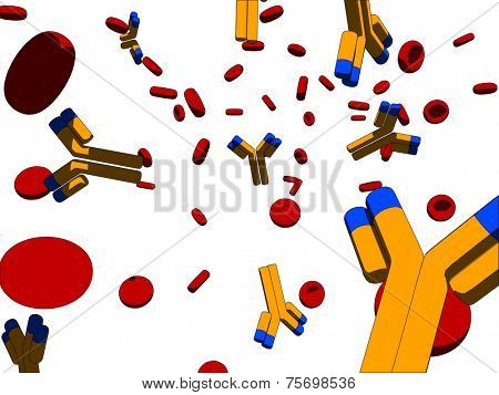 antibodies and blood cells