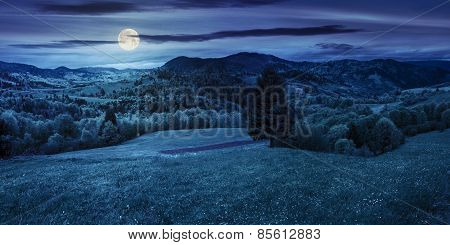 Coniferous Tree In A Panoramic Valley At Night